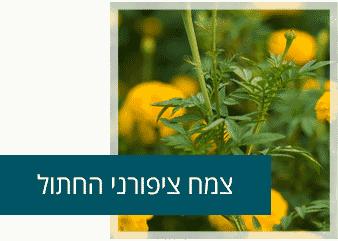 צמח ציפורני חתול