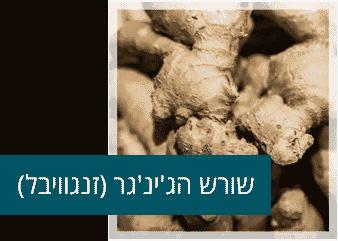 שורש ג'ינג'ר - זנגביל