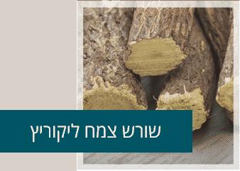 שורש צמח ליקוריץ
