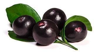 פרי צמח האסאי