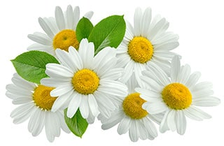 פרח הבבונג