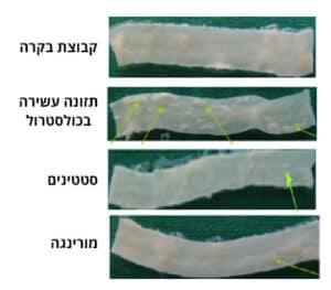 ההשפעות המעכבות של תמצית עלה מורינגה לעומת סטטינים על היווצרות הפלאק בעורקי הצוואר הפנימיים